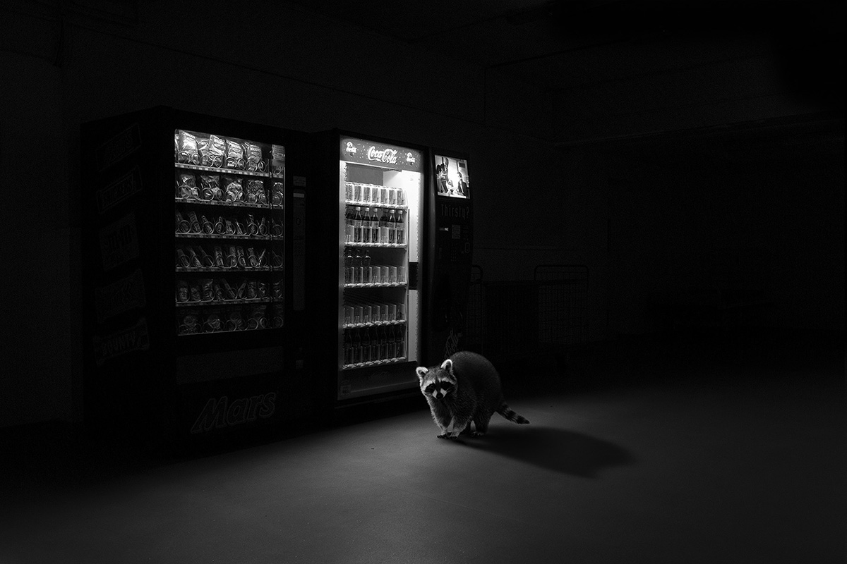 Jason McGroarty |