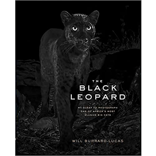 The Black Leopard by Will Burrard-Lucas