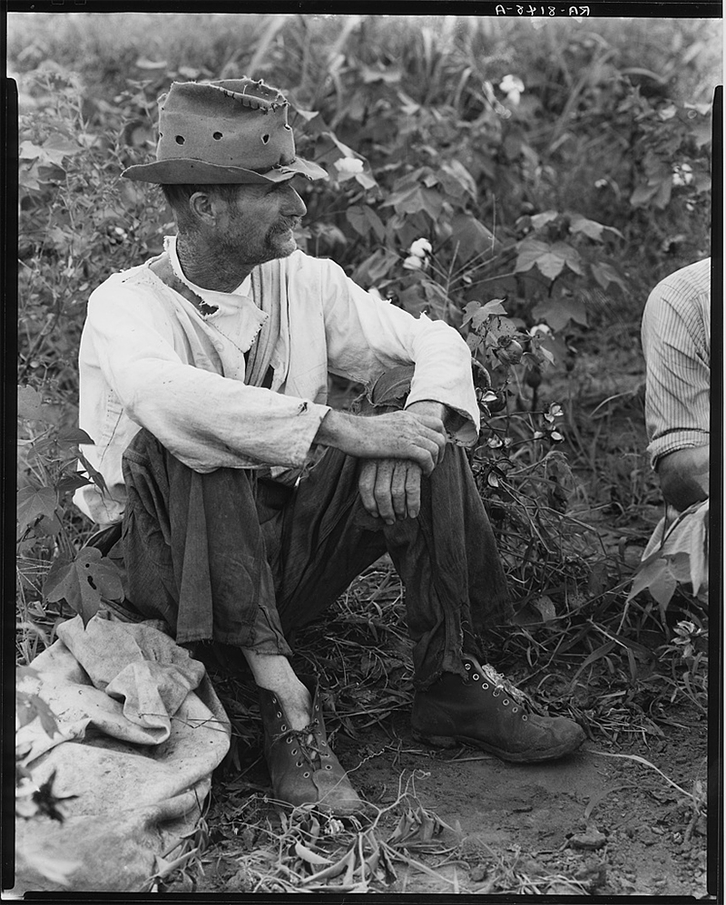 Walker Evans - Bud Fields in his cotton patch, 1935