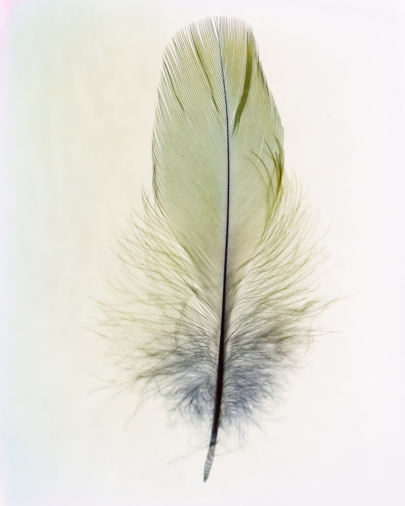 Taylor Curry - N01 Feather