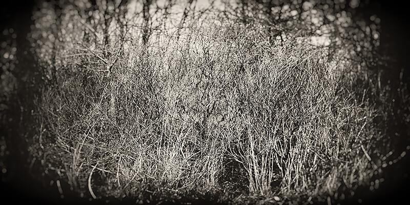 Bill Vaccaro - Prairie
