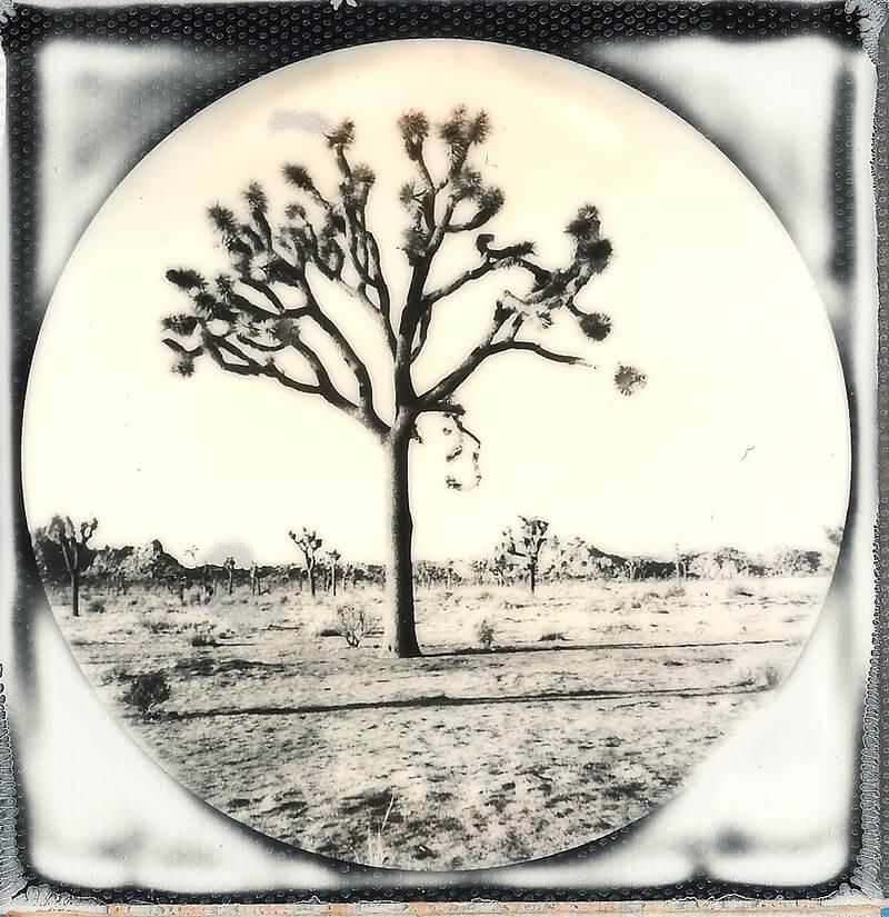 Cromwell Schubarth - Joshua Tree