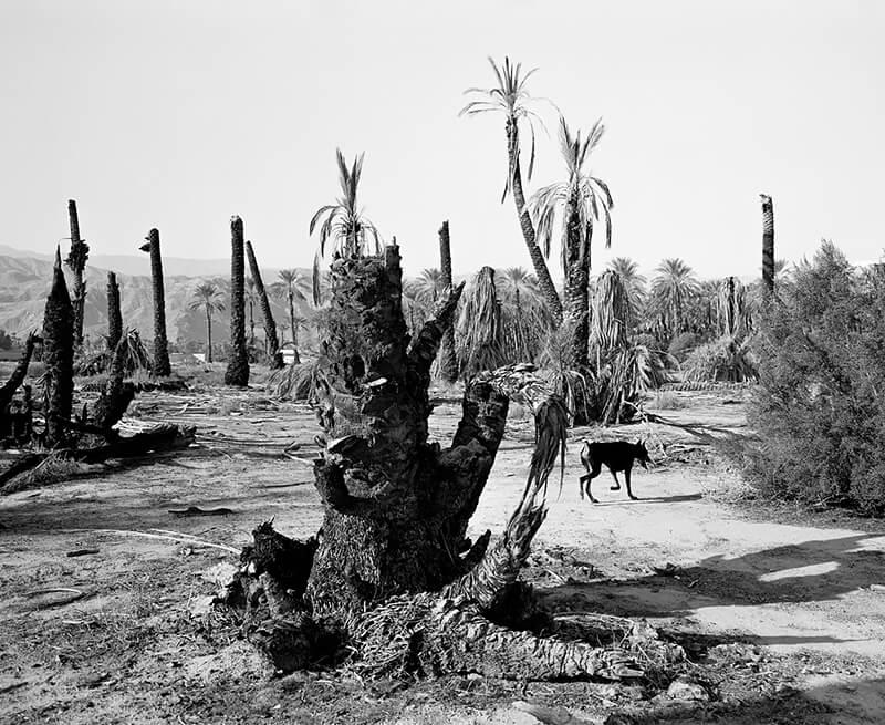 Mimi Plumb - Palm Desert