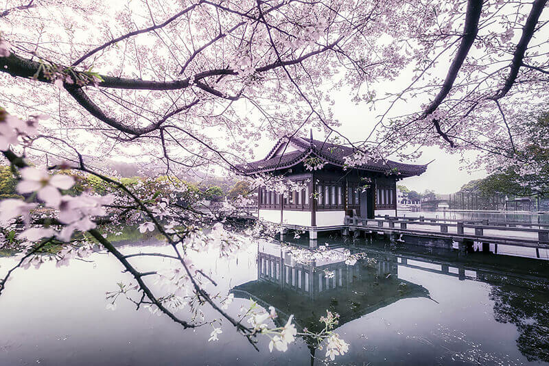west-lake-hangzhou-cherry-blossom-619766921