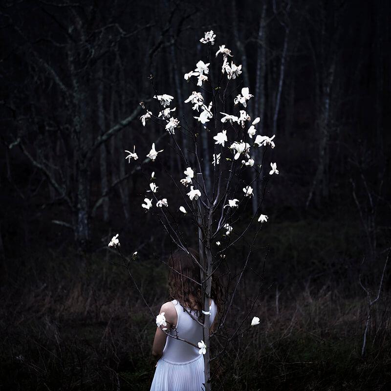 Cig Harvey - Magnolia Tree