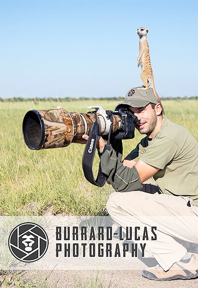 Will Burrard-Lucas: The last images of the Elephant Queen