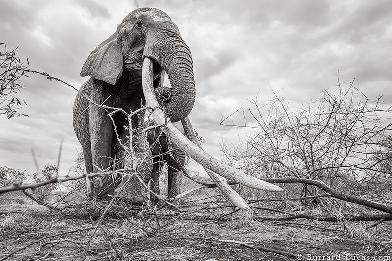 Will Burrard-Lucas: The last images of the... | All About ...