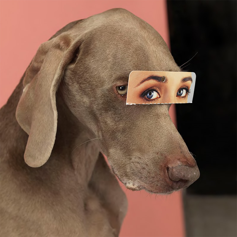 William Wegman/Aperture