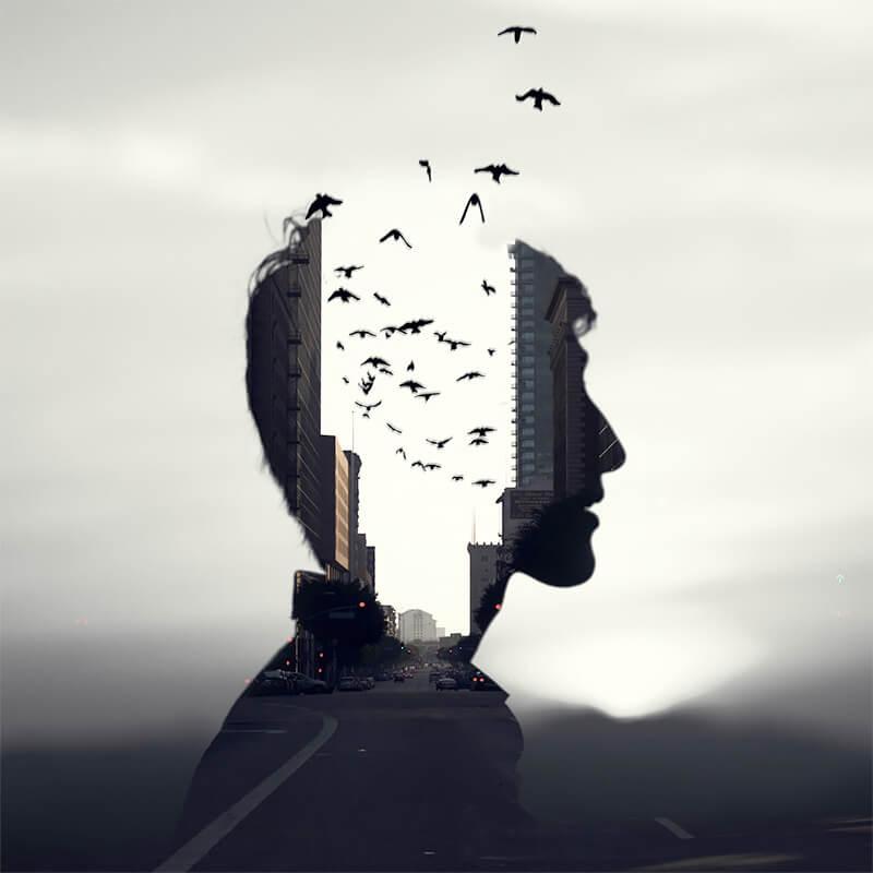 Mind the birds