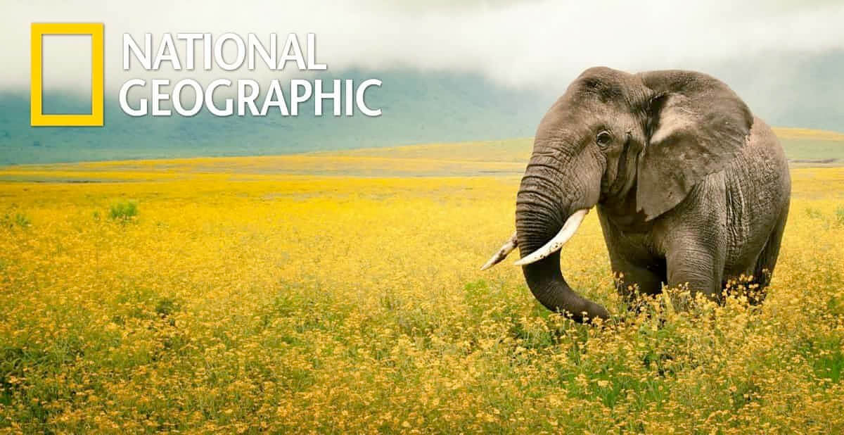 National Geographic title=National Geographic