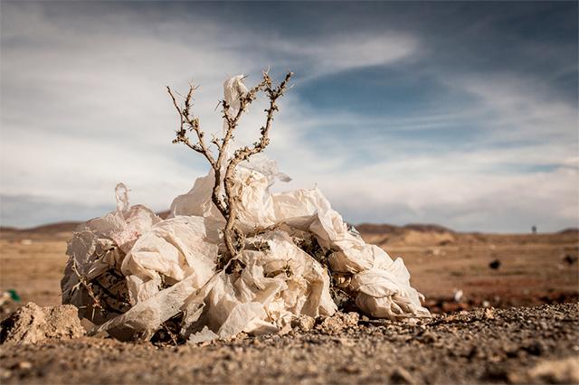 Plastic Trees: Eduardo Leal