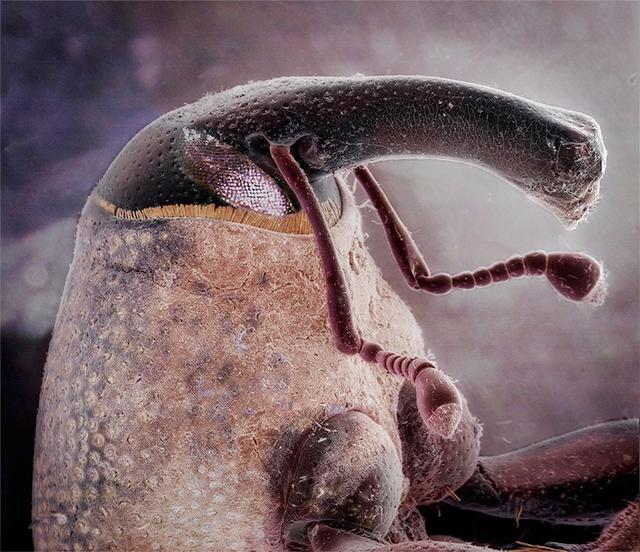 Suburban Symbiosis, Insectum Domesticus: Daniel Kariko