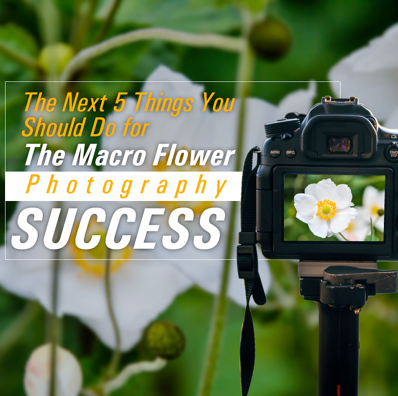 The Next 5 Things You Should Do For Macro Flower Photography Success