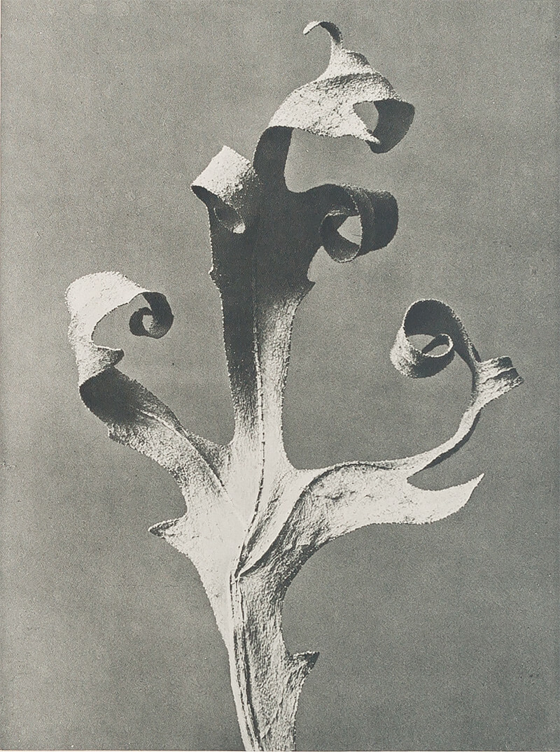 All the Marvelous Surfaces: Photography Since Karl Blossfeldt