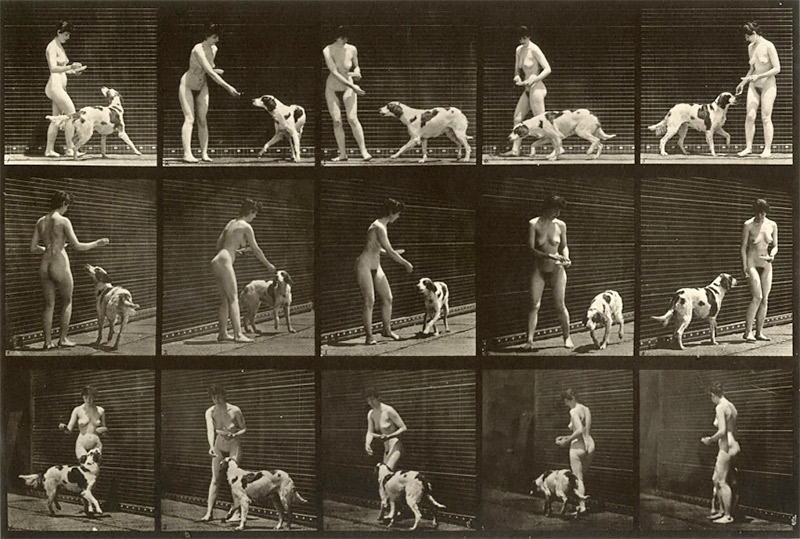 Eadweard Muybridge: Stopping Time