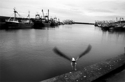 Guilhem Alandry - A seagull flies away over Newlyn harbor from which a handfull of fishermen still go out on the atlantic ocean to fish pilchards.