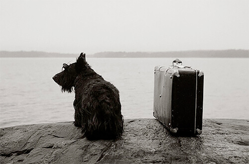 At home: Dog with suitcase, Inga, Finland 1981<p>© Kristoffer Albrecht</p>
