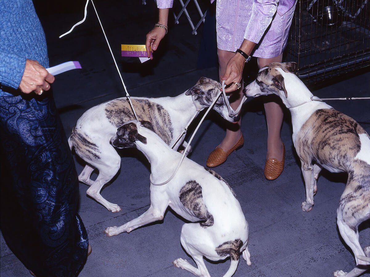 Dog Shows<p>© Martin Andersen</p>