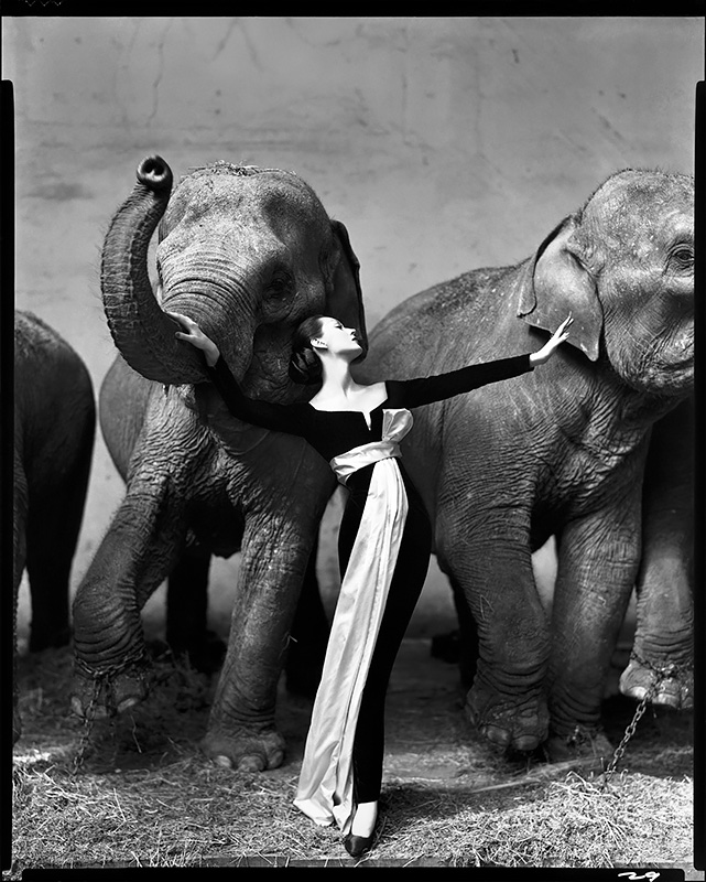Dovima with elephants, evening dress by Dior, Cirque d'Hiver, Paris, August 1955<p>Courtesy The Richard Avedon Foundation / © Richard Avedon</p>