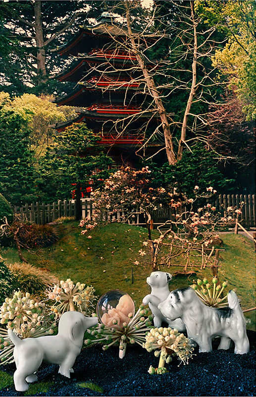 Japanese Tea Garden<p>© Stephen Albair</p>