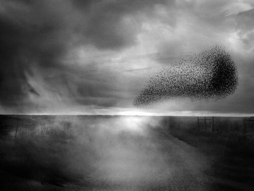 A wave in the air<p>© Angela Bacon-Kidwell</p>