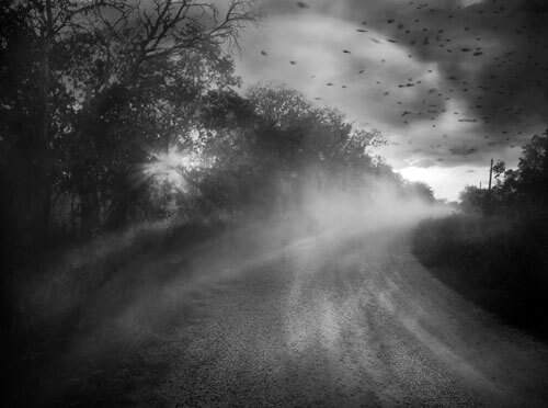 Chasing hop<p>© Angela Bacon-Kidwell</p>
