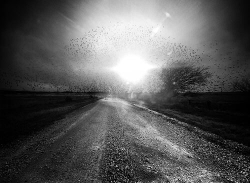 Morning Noise<p>© Angela Bacon-Kidwell</p>