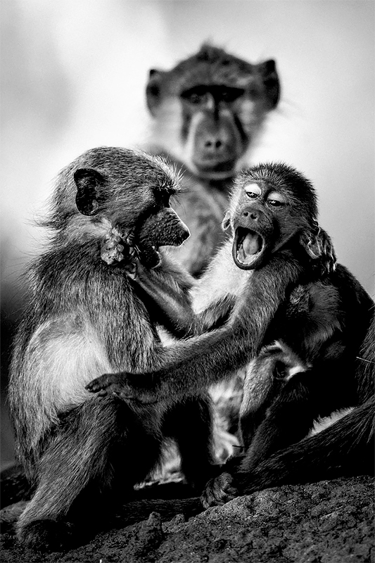 Two baby baboons, Botswana 2009<p>© Laurent Baheux</p>