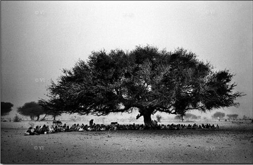 Displaced Sudanese take refuge under a tree in Disa, Northern Darfur.<p>© Marcus Bleasdale</p>