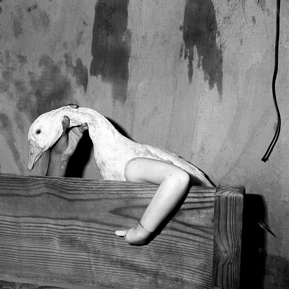 Roger Ballen - One Arm Goose, 2004