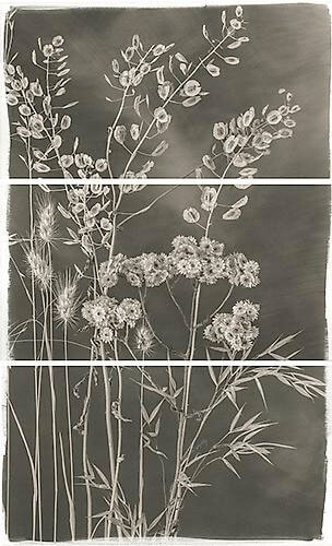 Brigitte Carnochan - Valley Grasses V 2012
