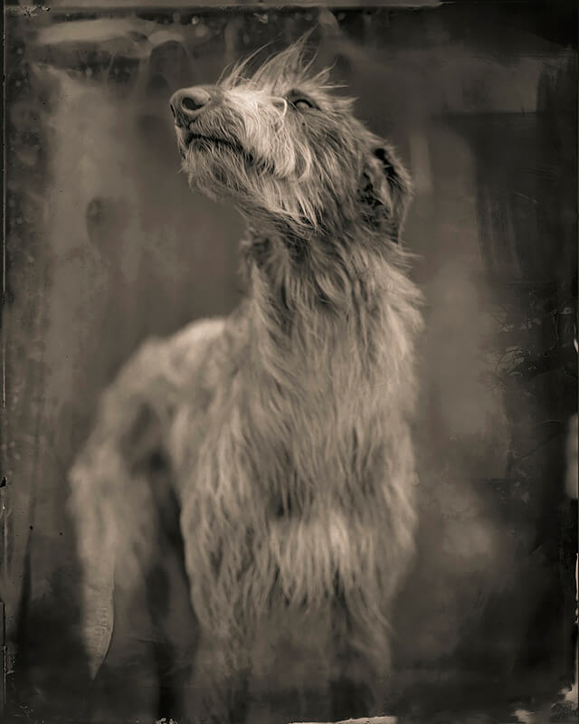 Keith Carter - Keith Carter, Bog Dog, 2014, Courtesy PDNB Gallery, Dallas, TX