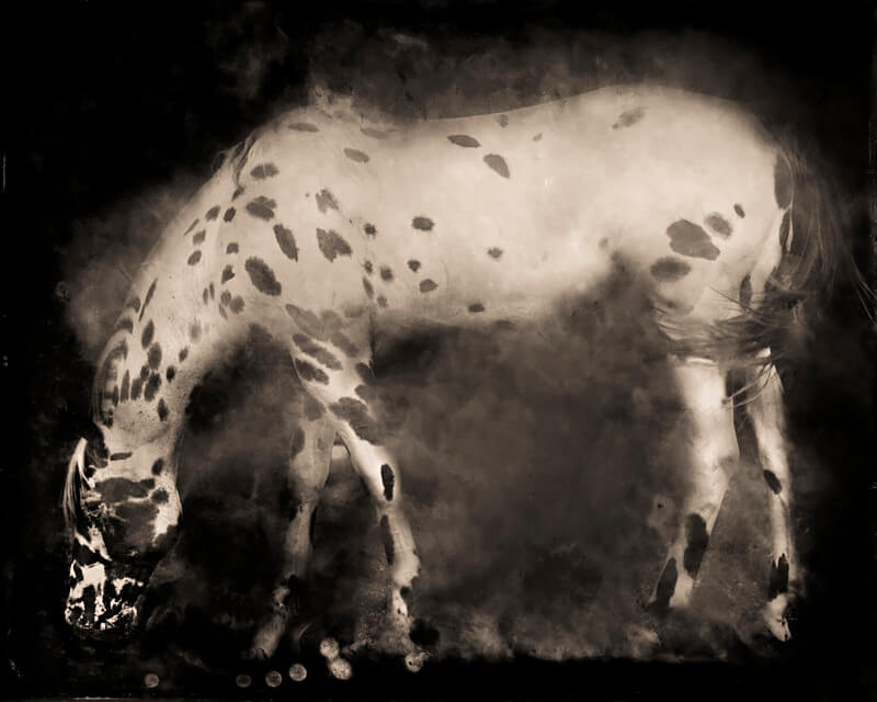 Keith Carter - Keith Carter, Leopard Appaloosa, 2014, Courtesy PDNB Gallery, Dallas, TX