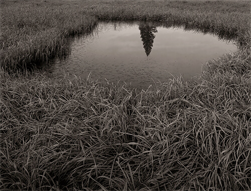 Mark Citret - Reflected Pine, Tuolumne Meadows