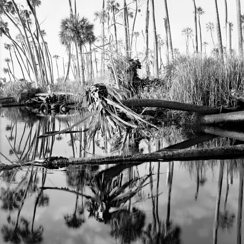 Benjamin Dimmitt - Palms in Creek