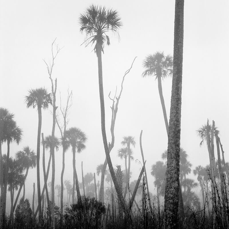 Benjamin Dimmitt - Eastern Savanna in Fog