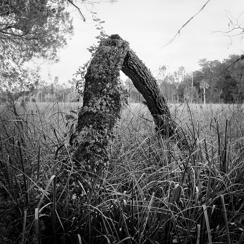 Benjamin Dimmitt - Collapsed Oak