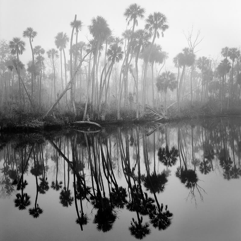 Benjamin Dimmitt - Creek in Fog