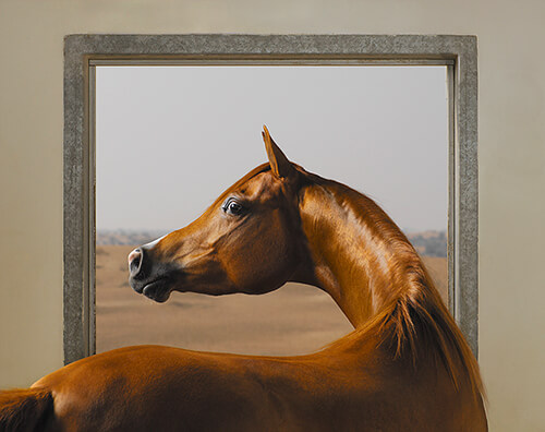 Tim Flach - Windows Chestnut
