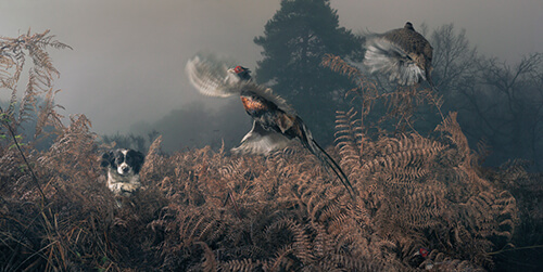 Tim Flach - Penny working the bracken
