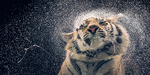 Kanja Shaking<p>Courtesy Peter Bailey Production / © Tim Flach</p>