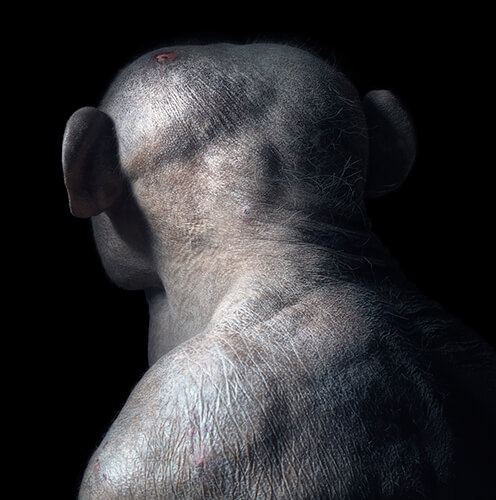 Jambo<p>Courtesy Peter Bailey Production / © Tim Flach</p>