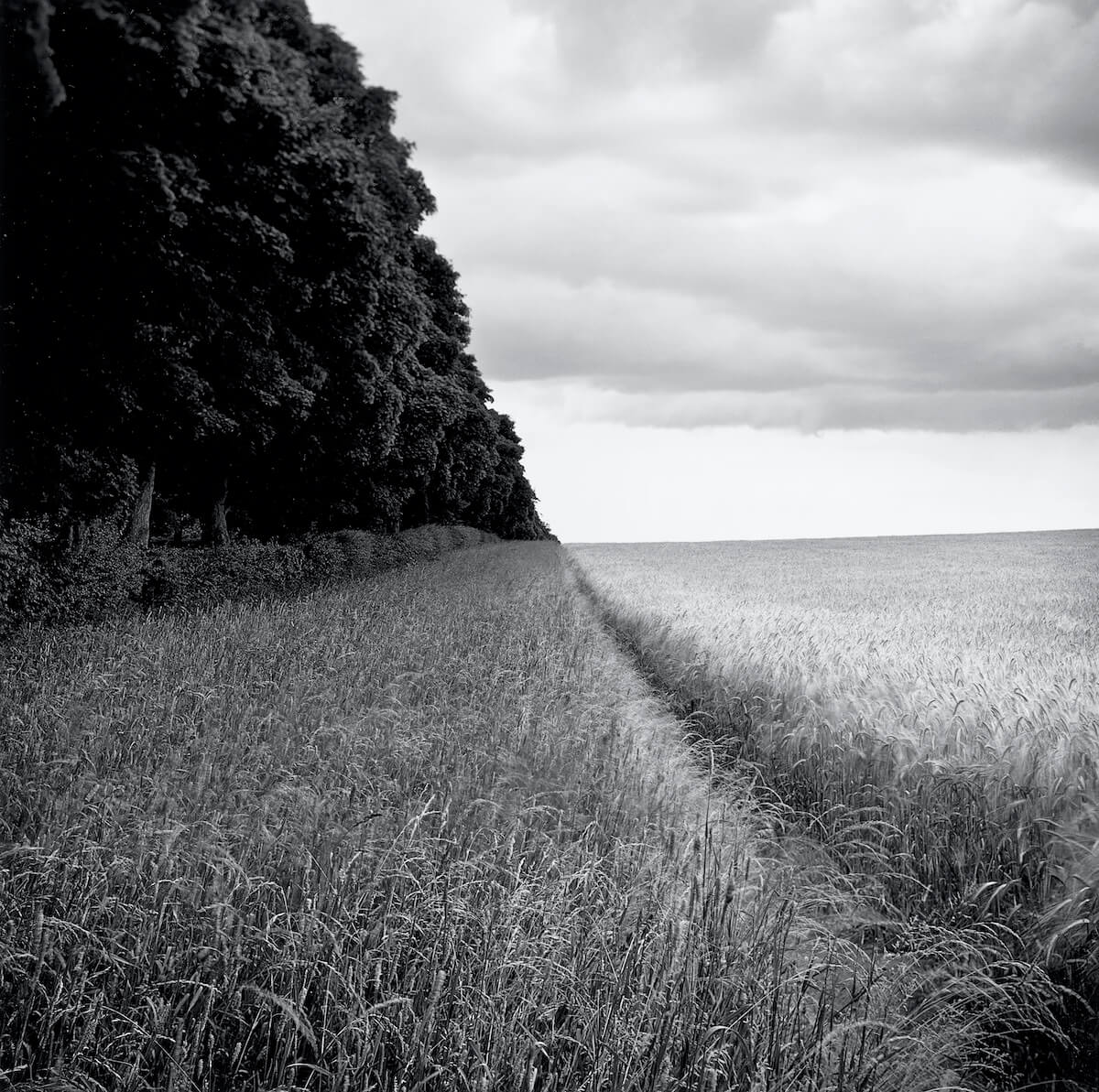 Anmer (2009) from the series FARMED <p>© Paul Hart</p>