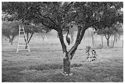 Chuck Kimmerle - Apple Orchard and Horse