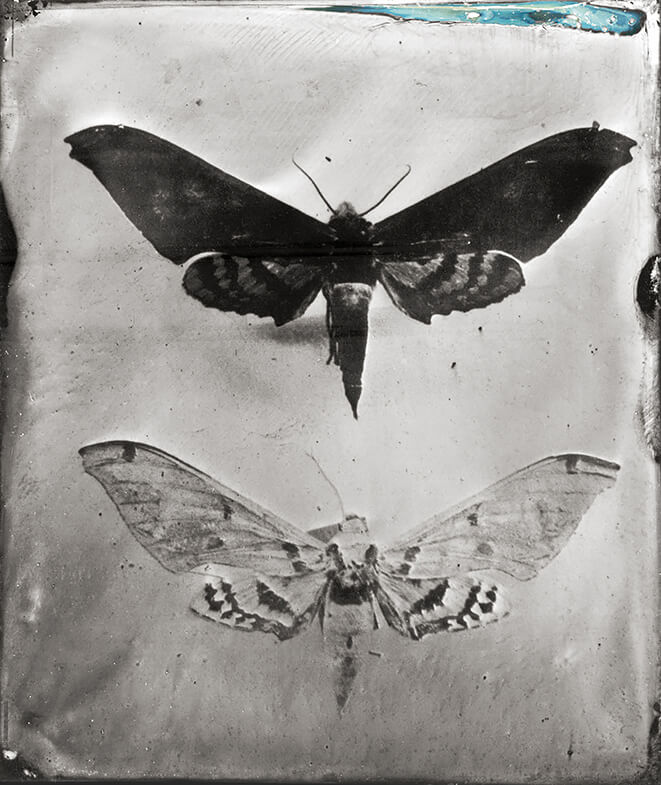 Entomological Atlas, Tintype<p>© Patricia Lagarde</p>