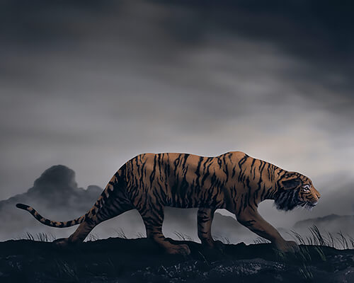 Didier Massard - The Tiger 2013