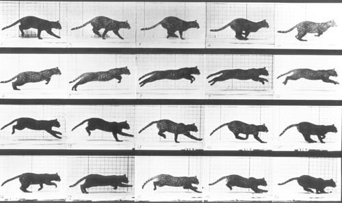Eadweard Muybridge - Animal Locomotion, Cat, date unknown
