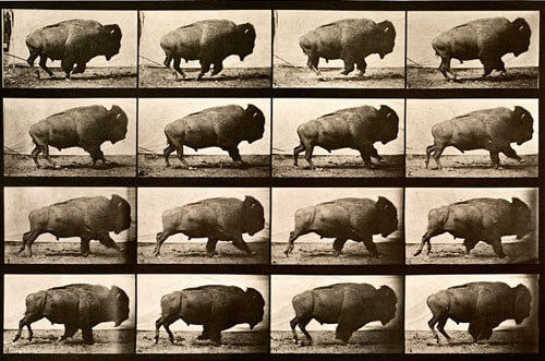 Eadweard Muybridge - Animal Locomotion, plate 700, 1887
