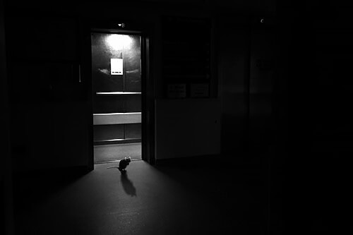 Jason McGroarty