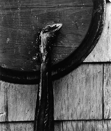 Aaron Siskind - Gloucester, c. 1944-45 © Aaron Siskind Foundation, courtesy of Bruce Silverstein Gallery, NY.